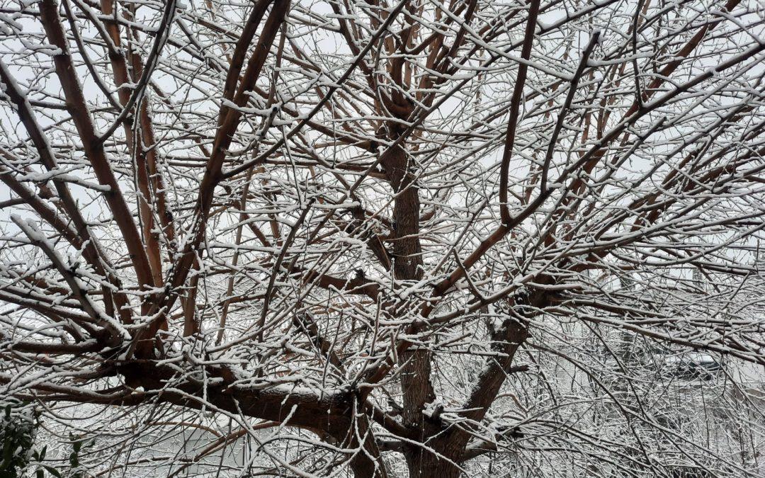 ¡Por fin nieva!