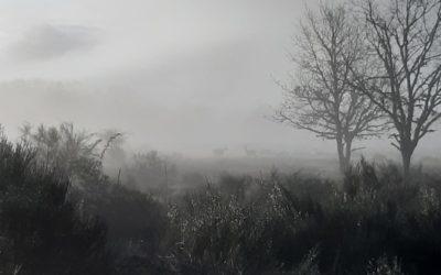 Ciervos madrugadores