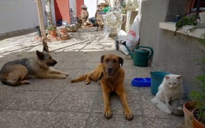 Canes y felinos