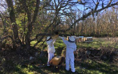 Nuevo panal de abejas