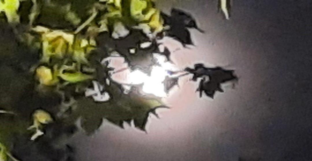 Luna llena de mayo